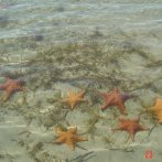 Playa de Estrellas